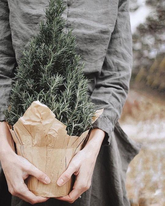 baby pine   grow   small plant   garden   fall / winter