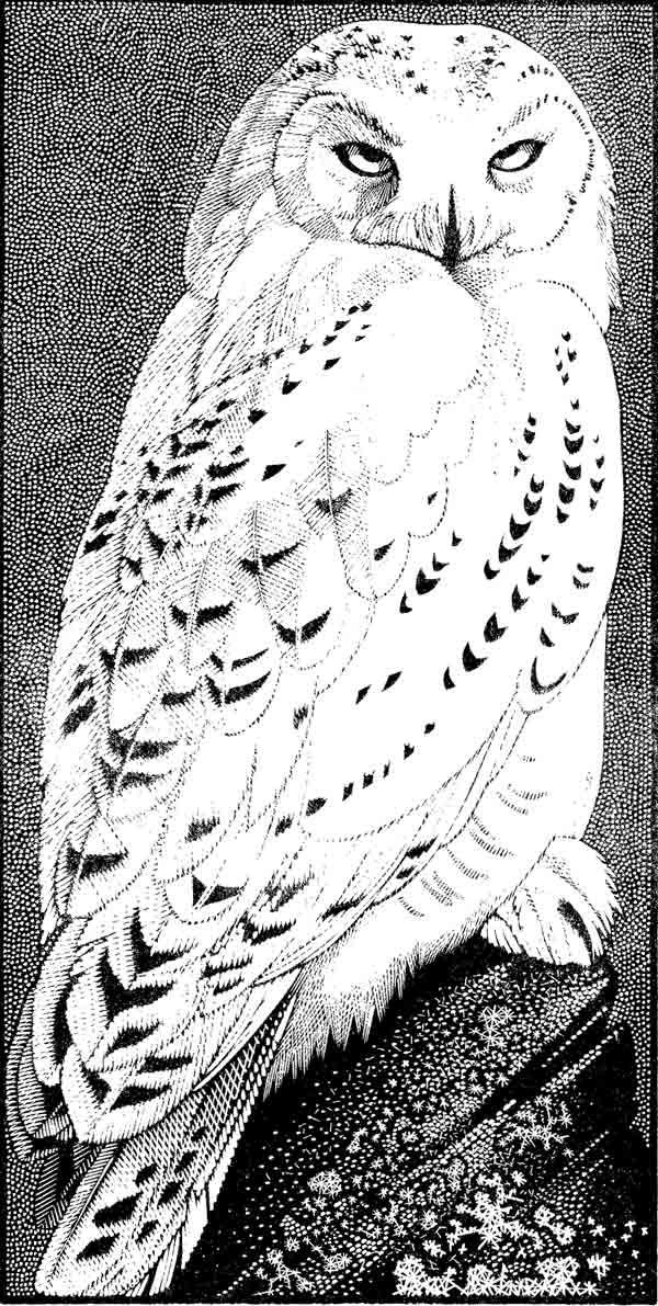 Snowy Owl ~ Wood Engraving ~ Colin See-Paynton ~ The Wildlife Art Gallery