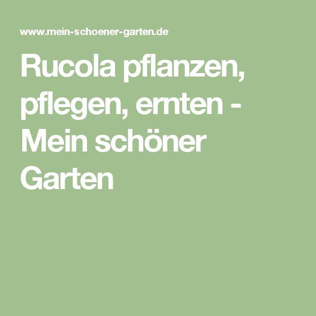 Rucola pflanzen, pflegen, ernten - Mein schöner Garten