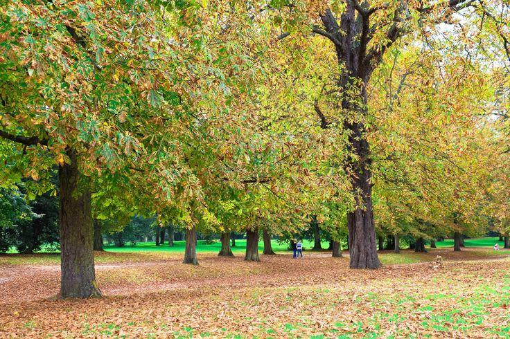 Jardins de Versailles, França, setembro 2013
