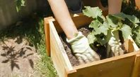 How to Grow Lemon Cucumbers | eHow