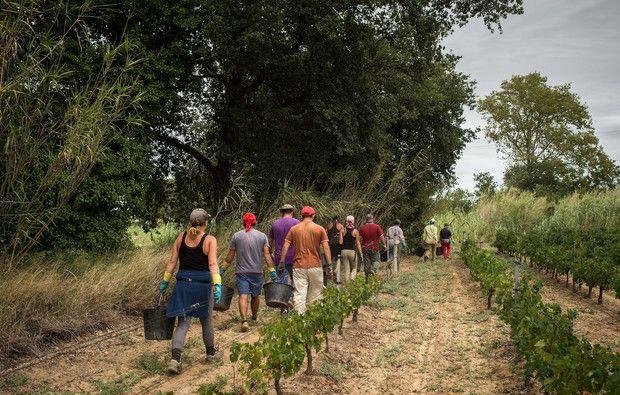 Aldeia do Futuro procura jovens agricultores