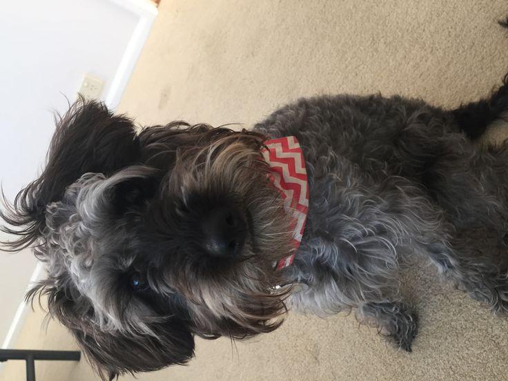 Salty dog bandanna by ocean trim
