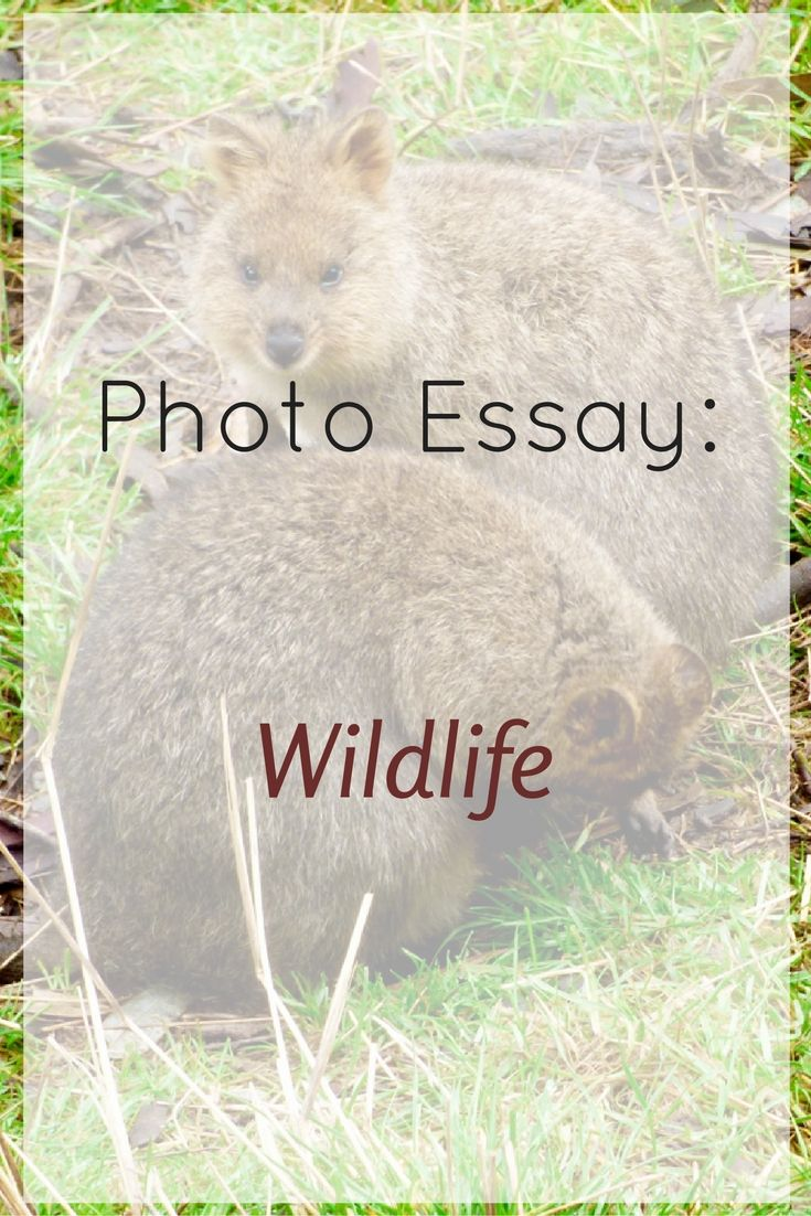 17 best ideas about photo essay documentary photo essay wildlife