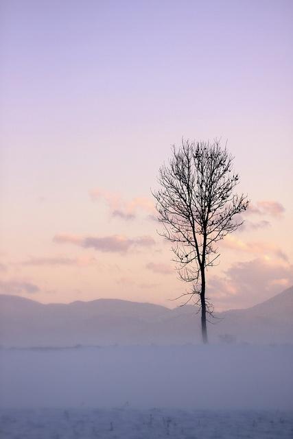 ☆ winter