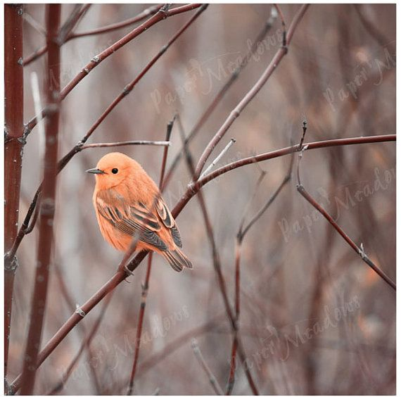 Bird Photo Download 12 X 12 Sunshine Orange Peach by PaperMeadows on Etsy.