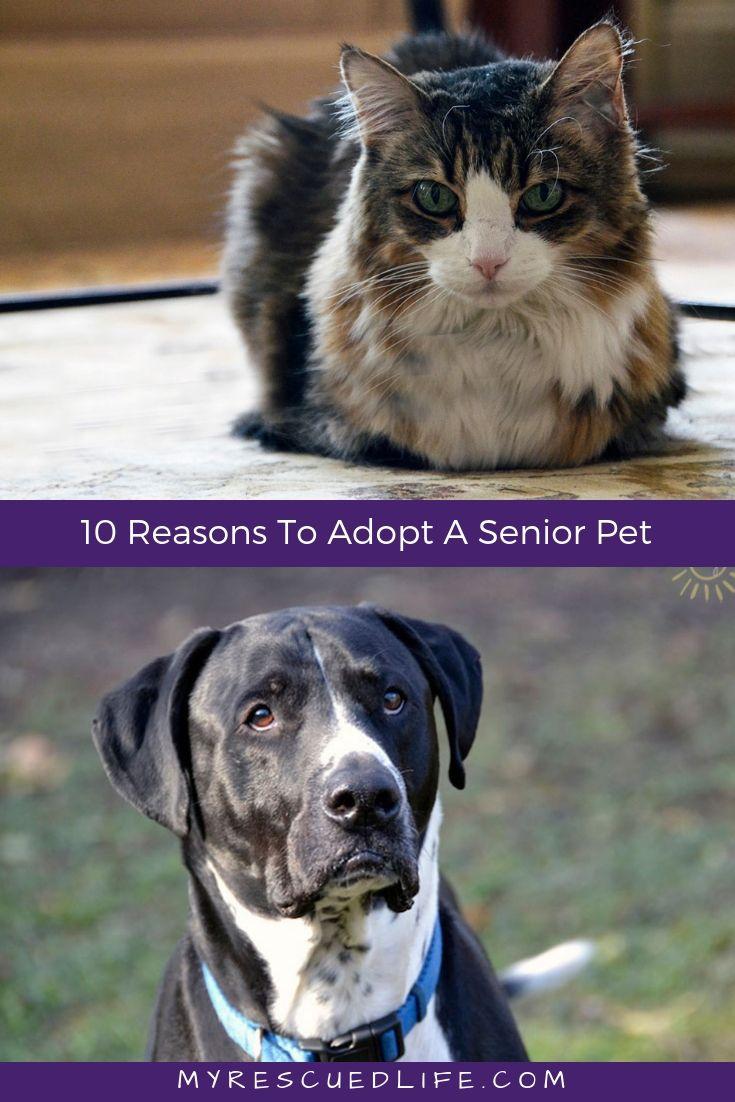 10 Reasons To Adopt A Senior Pet Today Dog Waiting Pets Homeless Pets