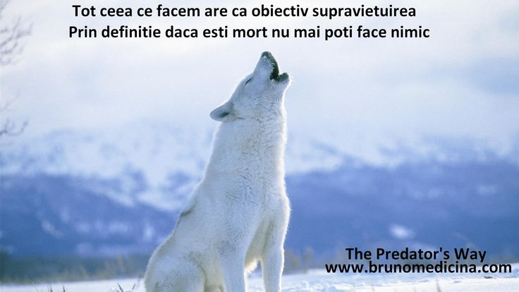 Everything we do aims the survival By definition if you're dead you can't do anything - Bruno Medicina   http://www.traininguri.ro/predator-selling/ https://www.facebook.com/bruno.medicina.1?fref=ts http://www.brunomedicina.com/