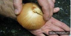 Soğanı Kesip Elinin Üstüne Koydu. Nedenini Öğrenince Aynısını Siz De Yapacaksınız.