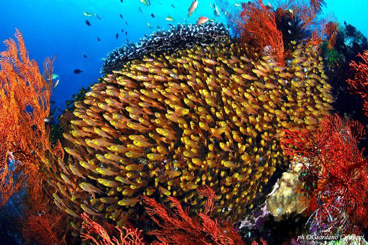 Exciting Bunaken Dive Park Minahasa Lagoon Manado Indonesia also Bunaken In Indonesia | Goventures.org