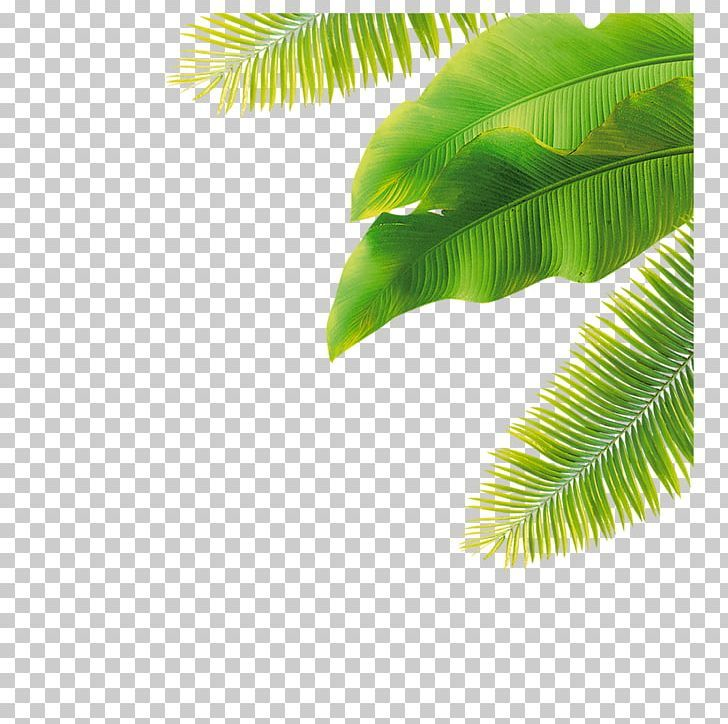 Palm Trees Portable Network Graphics Leaf Png Clipart Arecales Banana Banana Leaf Coconut Drawing Free Png Download Neon Wallpaper Mood Images Leaves