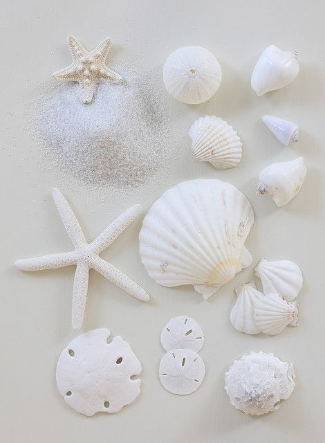 wish i could find these on our beaches: Bathroom Design, Sea Shells, Modern Bathroom, The Ocean, White Beaches, White Shells, Sands Dollar, Design Bathroom, The Sea
