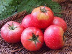 北九州市の観光農園ネイチャーではワンコインで完熟トマトが食べ放題になるイベントを開催中 ネイチャーはミディトマトやトマトベリーオレンジトマトにブラックトマトなど約5000本を栽培する農園 トマト狩り初心者にもスタッフが丁寧に教えてくれるから安心ですね 開園時間は10時17時木金は休園 7月末までは楽しめるらしいですよ 臨時休園することがあるので事前に確認することをおすすめします  #福岡 #レジャー #フルーツ狩り #北九州市 #イベント tags[福岡県]