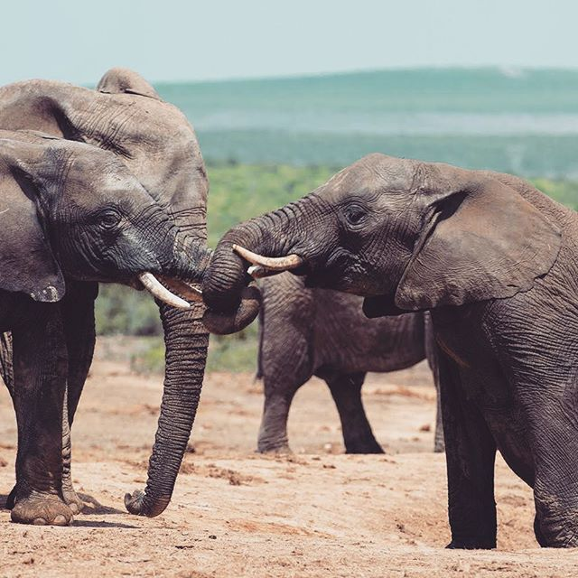 Park Krugera Miejsce Gdzie Mozna Obcowac Z Dzikimi Zwierzetami Afryki W Tym Czasie Nasza Mala Podrozniczka Najbardziej Byla Zainteresowana S Animals Elephant