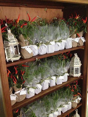 Lembrancinhas Ecológicas Le Petit Vert para Casamentos - árvores, ervas e temperos, flores, suculentas, sementes...