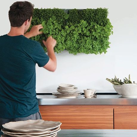 belgians dm depot company introduced their take on green design with karoo a living wall of vegetation - Outdoor Planter Wall Kitchen Designs