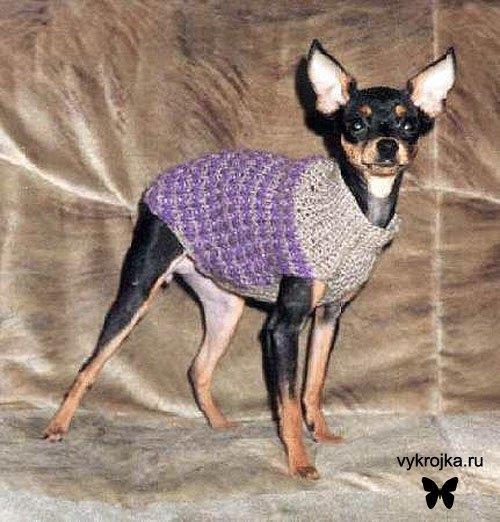 Как вязать свитер для собачки