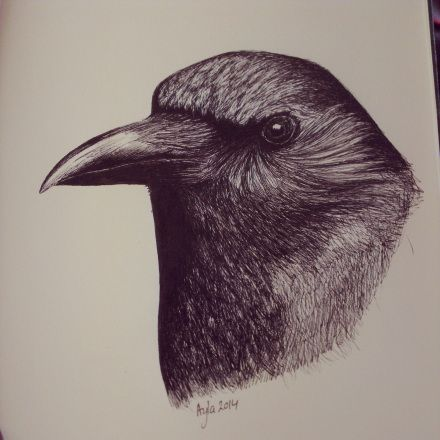 Day 19, #100daysofdoodling, a Raven (Raaf) by Ayla Paul