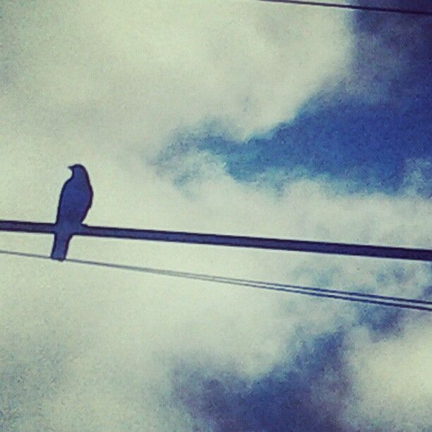 49 best crow on a wire images on Pinterest   Crows ravens, Ravens ...