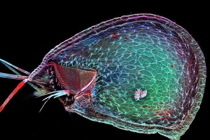 Dr Igor Siwanowicz sfotografował też wnętrze owadożernej rośliny - pływacza. Na zdjęciu widać jego ''pułapkę'' na owady.