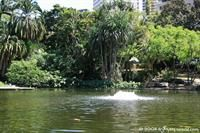 Lake in the Brisbane botanic garden.