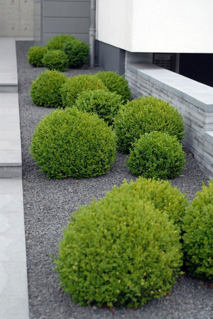 Formal Tailored Gardens | Boxwood spheres randomly placed in minimal grey gravel - Sequin Gardens