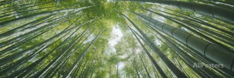 Low Angle View of Bamboo Trees, Hokokuji Temple, Kamakura, Kanagawa Prefecture, Kanto Region, Ho... Papier Photo par Panoramic Images sur AllPosters.fr