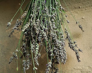 Organic Lavender, so many uses, so beautiful as nature intended.
