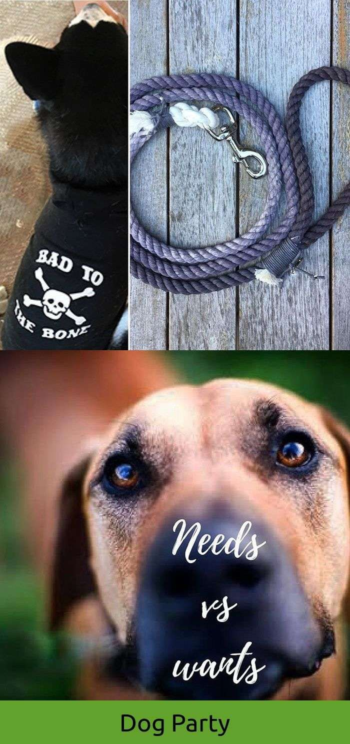 Dogs In The Vineyard Dogs Dogs Hound Dog Breeds Dog Tattoos