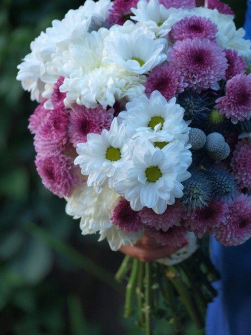 Flores para Maron