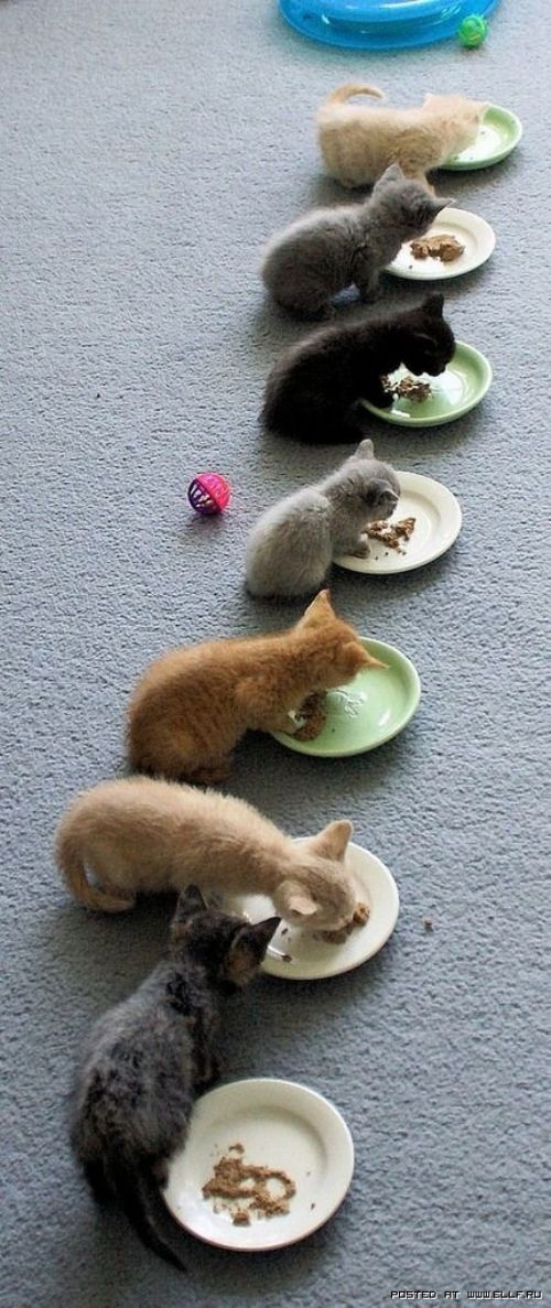 Pretty little kitties all in a row: Kitty Cats, Animals, Dinner Time, Pets, Crazy Cat, Baby, Kittens, Cat Lady