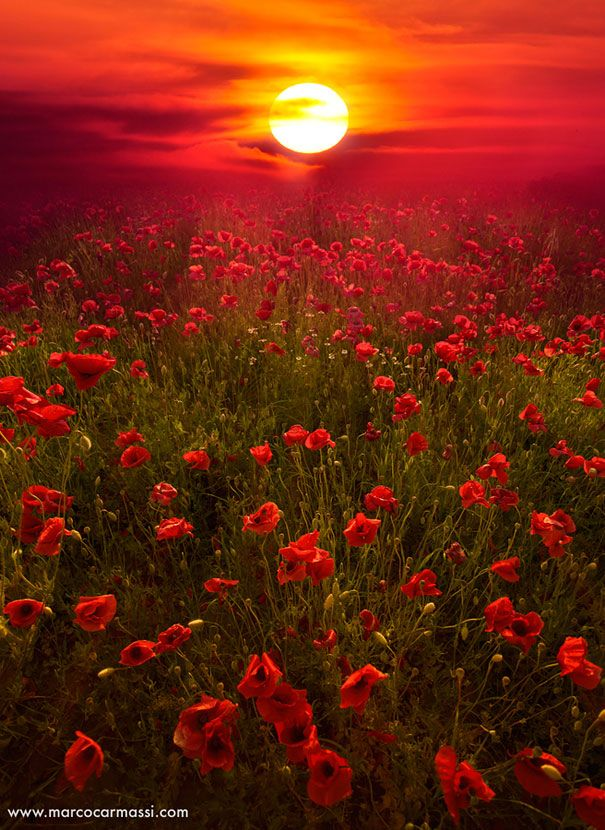 Marco Carmassi captured a red sky amungst a field of beautiful blossomed poppies.