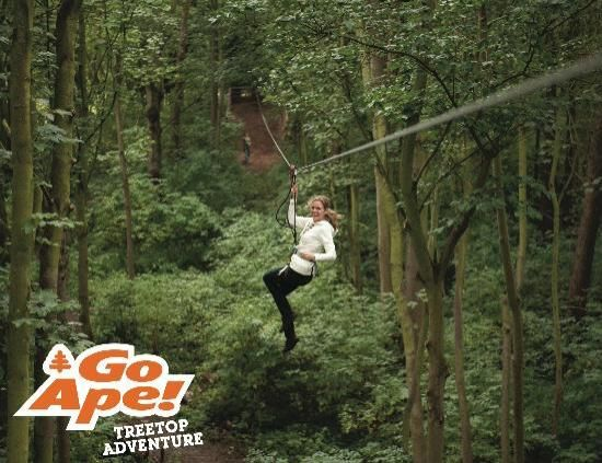 Indulge in a Tarzan or Jane yell at the Go Ape Treetop Adventure by racing down zip lines. Thrills and Chills. You need to allow time for a trip to Busch Gardens, Water Country USA or Great Wolf Lodge.