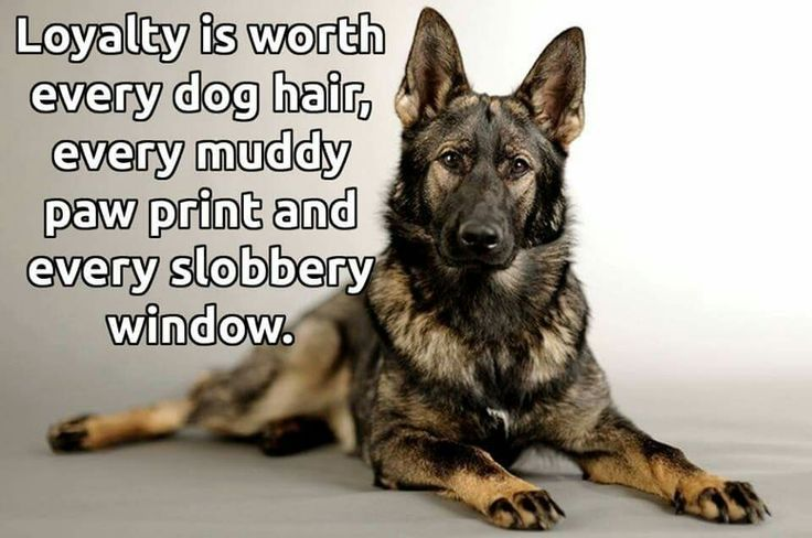 How Your Dog Should Behave In Public 100 Shepherd Dog Dogs