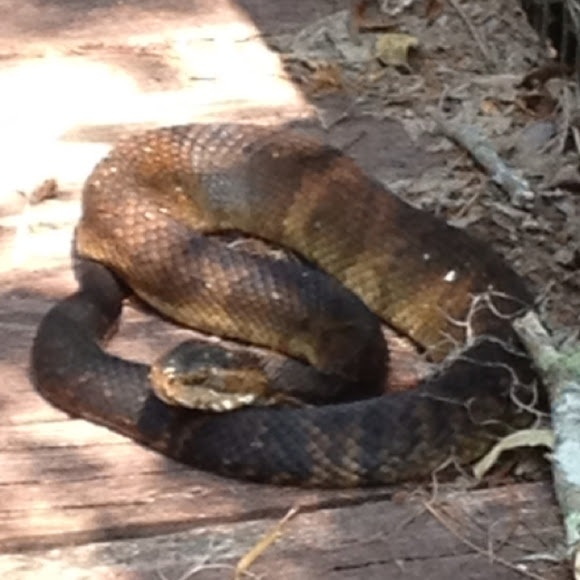 Adult index snakesworld