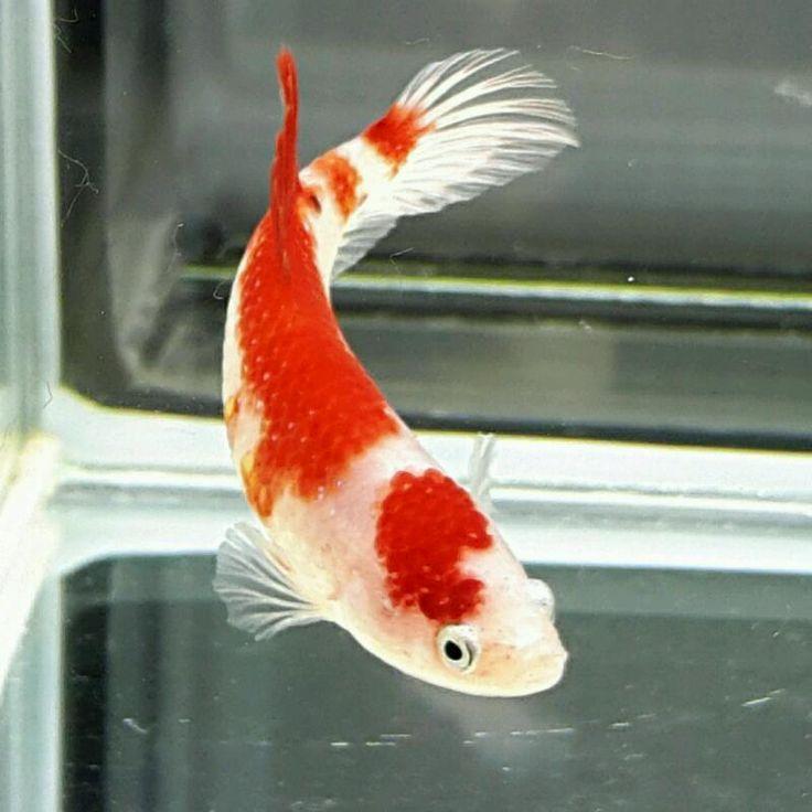 104 best images about aquarium ideas on pinterest for Betta fish aquaponics