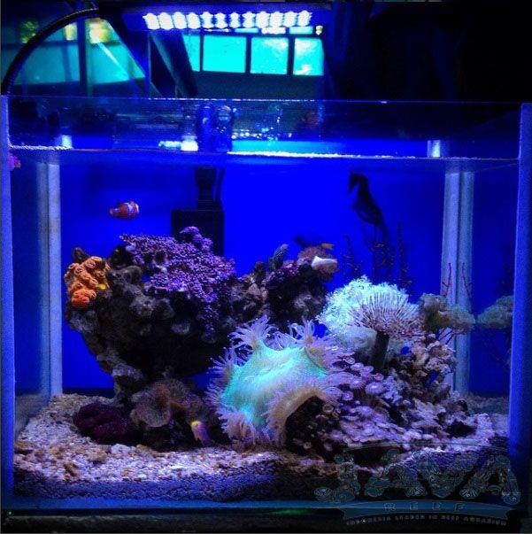 pemasangan aquarium air laut di jakarta timur