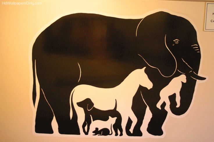 elephant on the wall optical illusion 580x386 optical illusion                                                                                                                                                                                 More