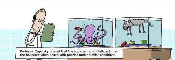 Cartoon shows a scientist with a clipboard, standing next to 2 tanks: one with an octopus building with blocks, another with a dead cat and building blocks. The professor finds that the octopus is smarter than the cat under the same conditions. ;)