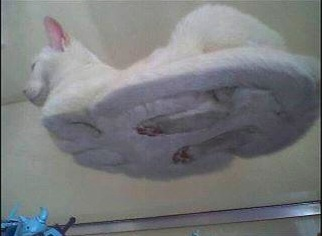 So that's how they do that!Funny Cat, Hover Cat, Funny Stuff, Funny Animal, So Funny, Kitty, Hovercat, White Cat, Glasses Tables
