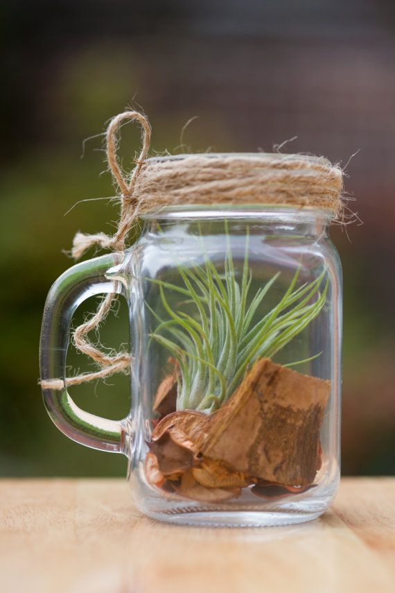 Air Plant Garden Jar Terrarium Unique Handmade Gift