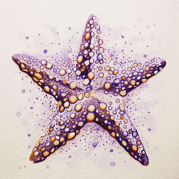 Purpura Starfish Canvas Print / Canvas Art by William Love