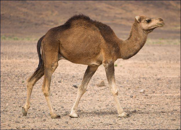 109 Best Animals Images On Pinterest: 12 Best Desert Animals Images On Pinterest
