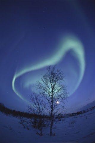 Spiral Aurora and Winter Tree, Yellowknife, Northwest Territories, Canada. Photo by Nori Sakamoto.