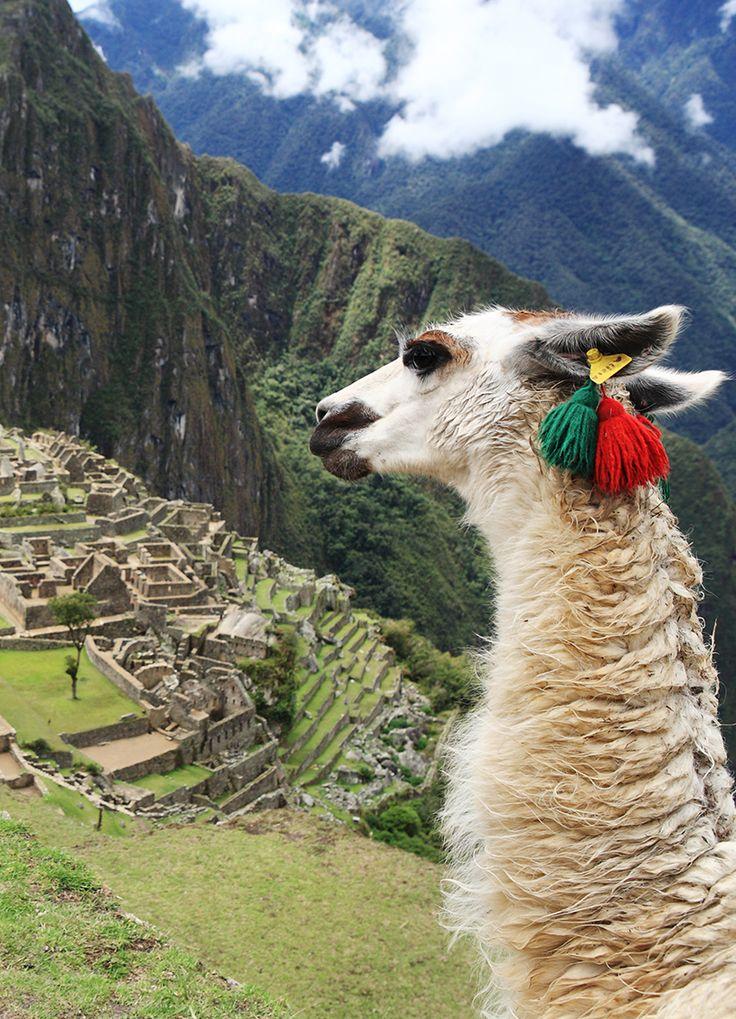 Además de las impresionantes ruinas de #MachuPicchu, no dejes de probar la gran variedad de bebidas que tiene #Peru