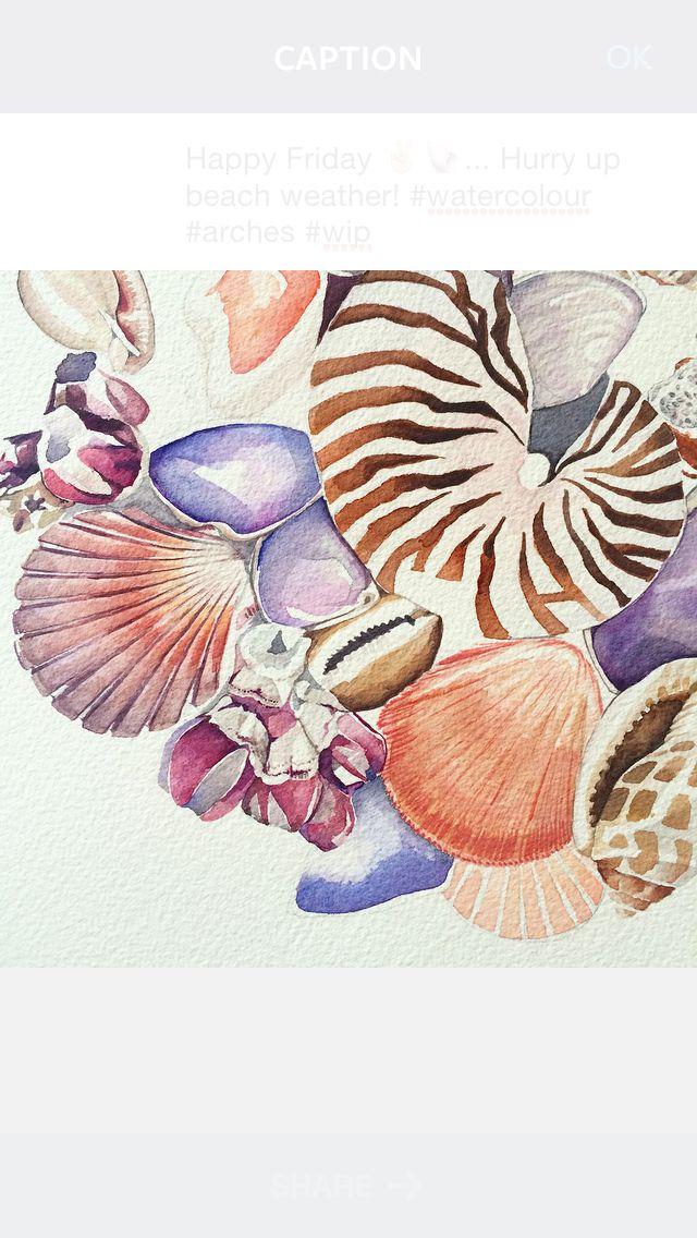 Work in progress - watercolours shells by Pip Spiro