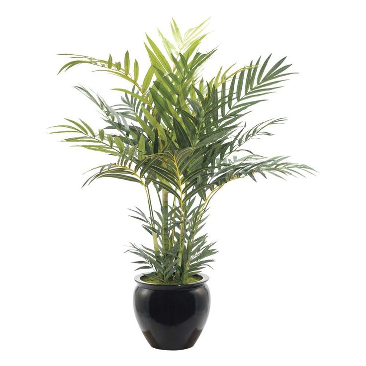 ICA Home And Garden - NATURAL DECORATIONS - Kentia-Palm ...