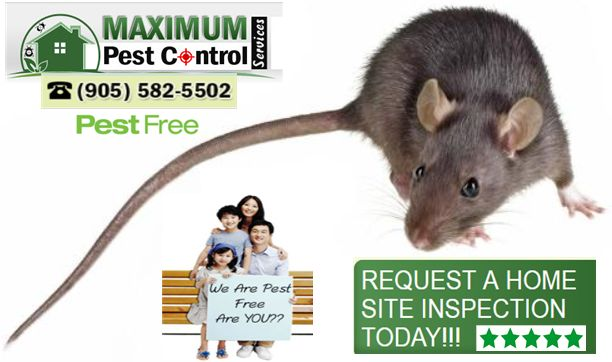 http://ift.tt/1HTKoXB  For serious infestations of rodents & requiring immediate same day pest control service for rat http://ift.tt/1eIZPl4 (905) 582 5502 Oakville & Burlington or (289) 396-5426 Hamilton & Ancaster. A certified professional exterminator is usually very necessary. When using rodent control company take care not to go by price alone. Be sure the hired exterminators are licensed bonded and possess all necessary skills and experience in rodent set up control before permitting…