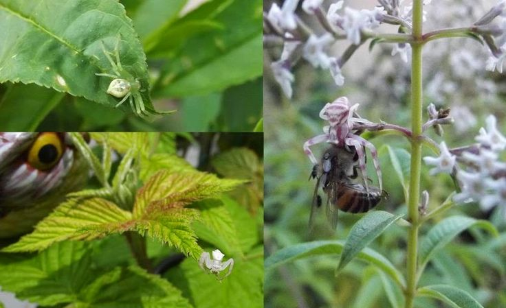 Roots 'n' Shoots: Spiders: Biological Control - Garden Critter of the Month