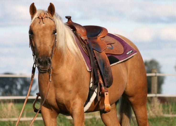 e horses